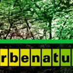 Merbenature el sellante Ecológico con materias primas renovables